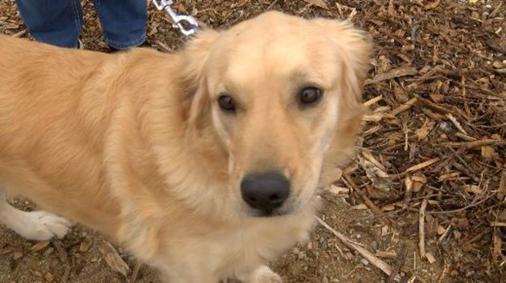 Police officer shoots pit bull attacking golden retriever | KECI